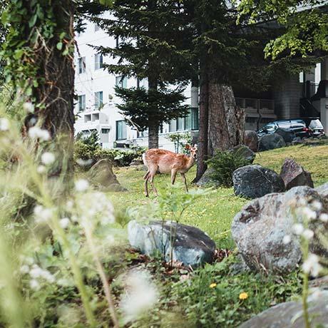 阿寒湖周辺の森の中の鹿