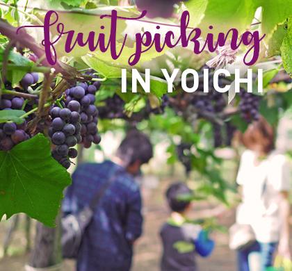 Autumn Fruit Picking in Yoichi at Yamamoto Sightseeing Orchard