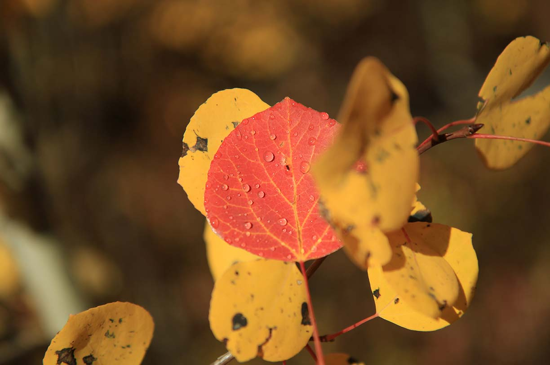 Fabulous Fall Hikes in Niseko