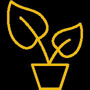 Wachsen Icon