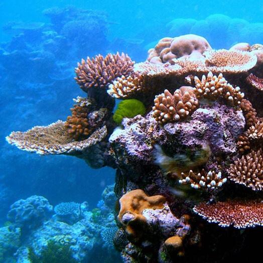 Reserva Marina del Arrecife de La Isla Verde, Carolina.