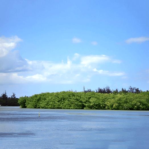 Laguna Torrecilla, Carolina.