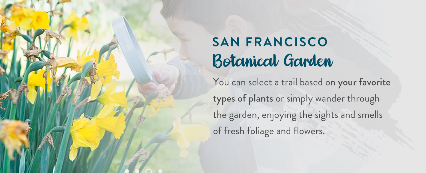 San Francisco Botanical Garden