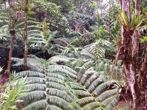 trip210_8_costa rica_regenwald