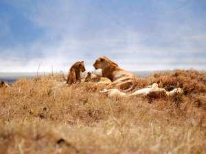 trip199_9_tansania_ngorongoro_crater