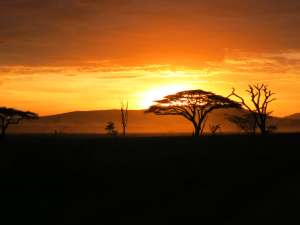 trip199_5_tansania_serengeti