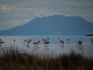 trip199_4_tansania_lake natron