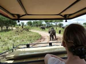 trip199_1_tansania_tarangiere_pirschfahrt_elefanten