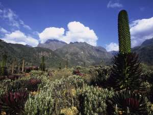 trip198_5_uganda_rwenzori_mountains_nationalpark