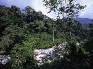 trip198_4_uganda_rwenzori_mountains_nationalpark