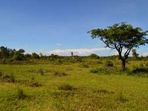 trip196_3_uganda_landschaft