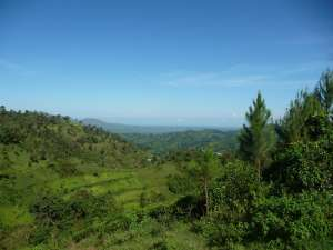 trip195_1_uganda_bwindi
