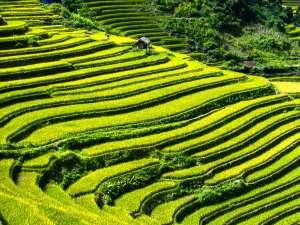 trip187_1_vietnam