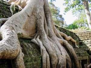 trip180_4_cambodia_ta_ prohm