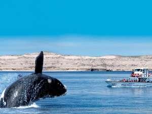 trip155_4_argentinien_puerto_ madryn