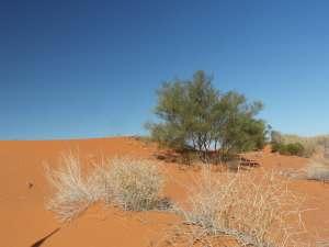 trip243_13_australien