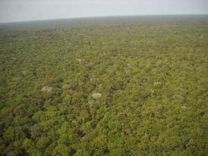 trip30_Brasilien_Dschungel