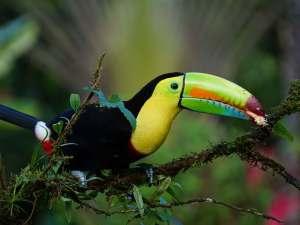 trip30_Costa Rica_Toucan