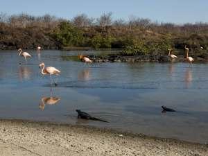 trip112_Ecuador_Galapagos_Flamingos