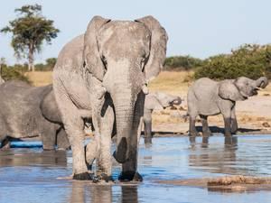trip311_namibia_botswana_elefant_pb