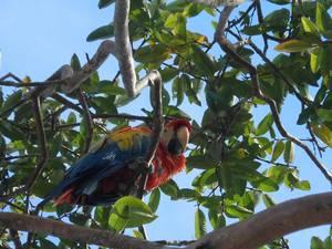 trip318_kolumbien_papagei_pb