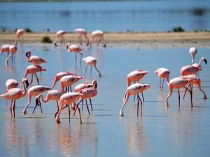 trip324_namibia_flamingos_pb