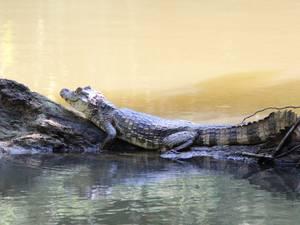 trip302_costarica_krokodil_pb