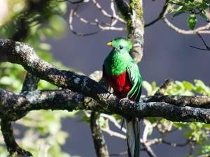 trip302_costarica_quetzal_pb