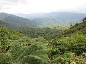 trip299_CostaRica_Monteverde_pb