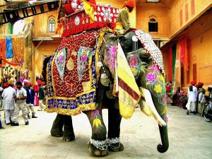 trip326_Indien_elefant Jaipur_ia