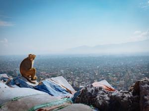 trip331_Nepal_Swayambhunath, Kathmandu_ Moneky temple_ us