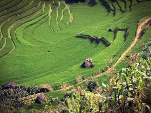 trip352_Vietnam_SapaGruen_pb.jpg