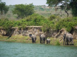 trip313_Uganda_Elefanten Kazinga_pb