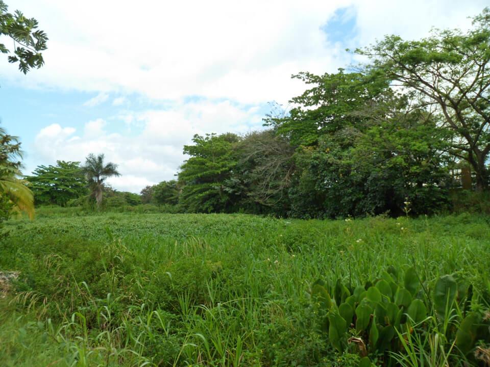 Urbanización Jardines de Country Club, Carolina, Puerto Rico.