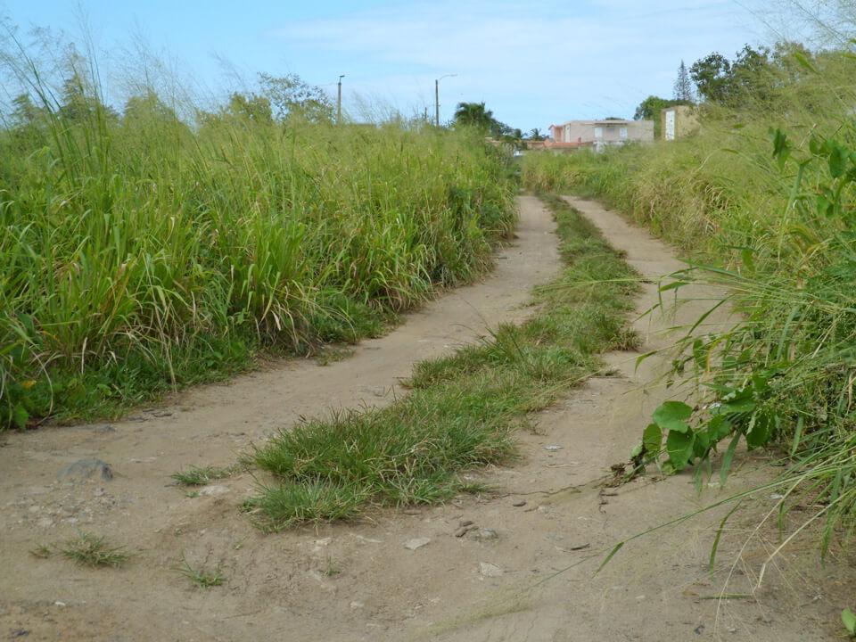 Caminito entre las calles 134 y la calle 151, Urbanización Jardines de Country Club, Carolina, Puerto Rico.