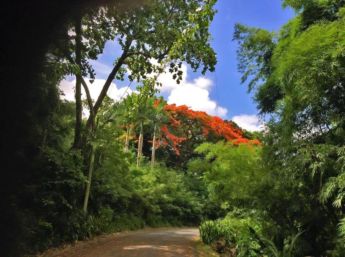 Colinas de Cacao, Carolina, Puerto Rico.