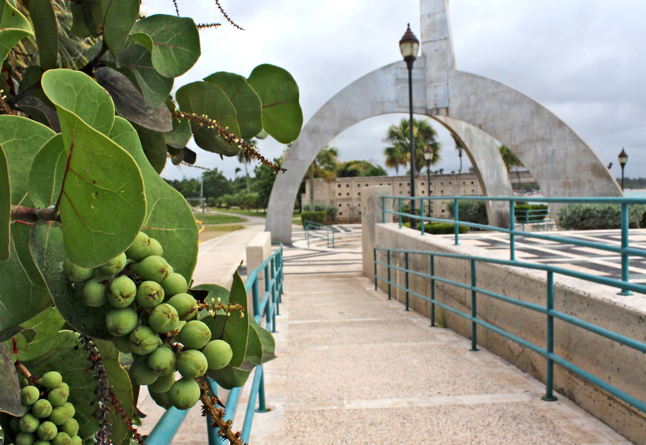 Uvas playeras en la Plaza de la Juventud de Isla Verde, Carolina, PR.