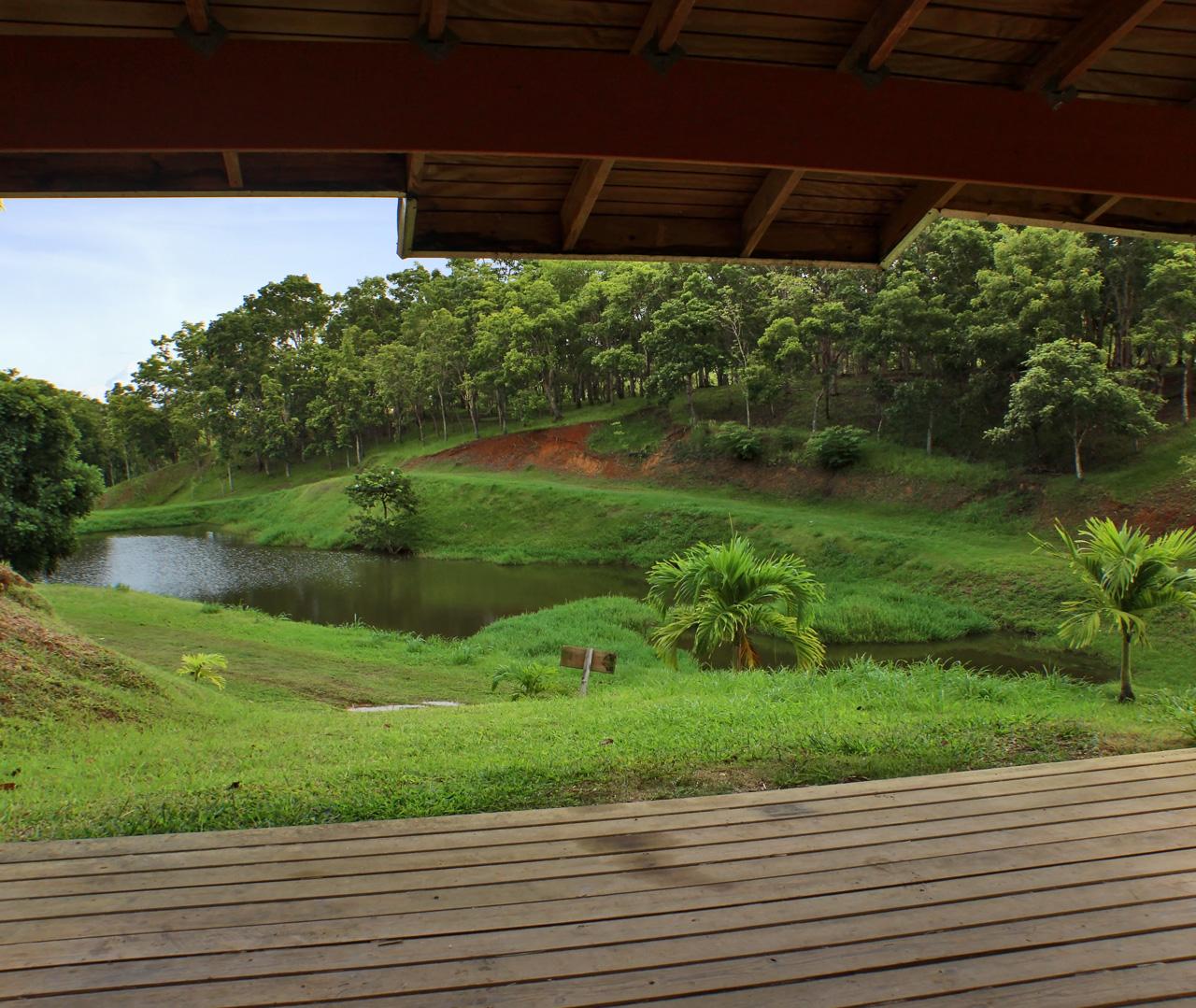 Reserva Forestal de Barrazas, Carolina, Puerto Rico.