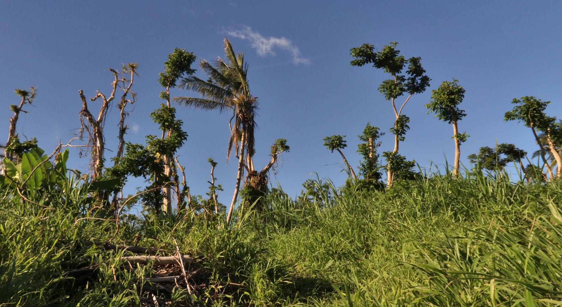 Matorral cerca de Villa Caridad, Carolina, PR.