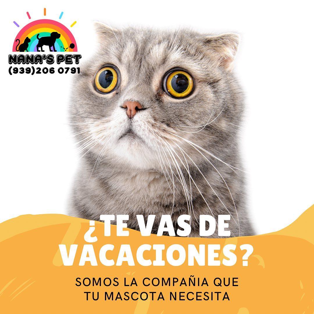 May be an image of cat and text that says 'NANA'S PET (939)206 0791 TE VAS DE VACACIONES? SOMOS LA COMPAÑIA QUE TU MASCOTA NECESITA'