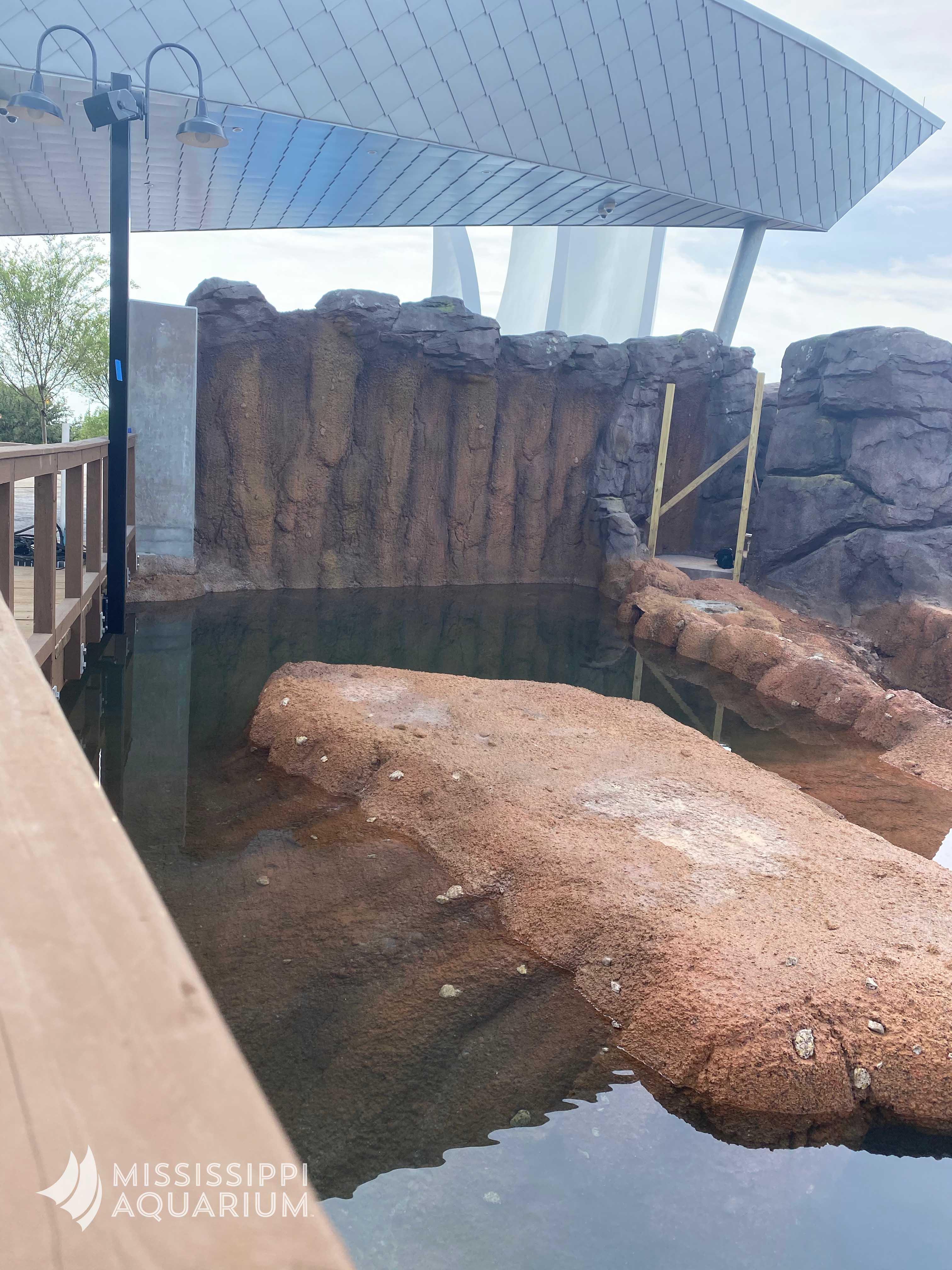Mississippi Aquarium Alligator