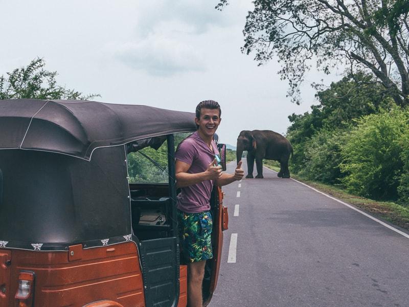 spotting elephants on the way to Kataragama