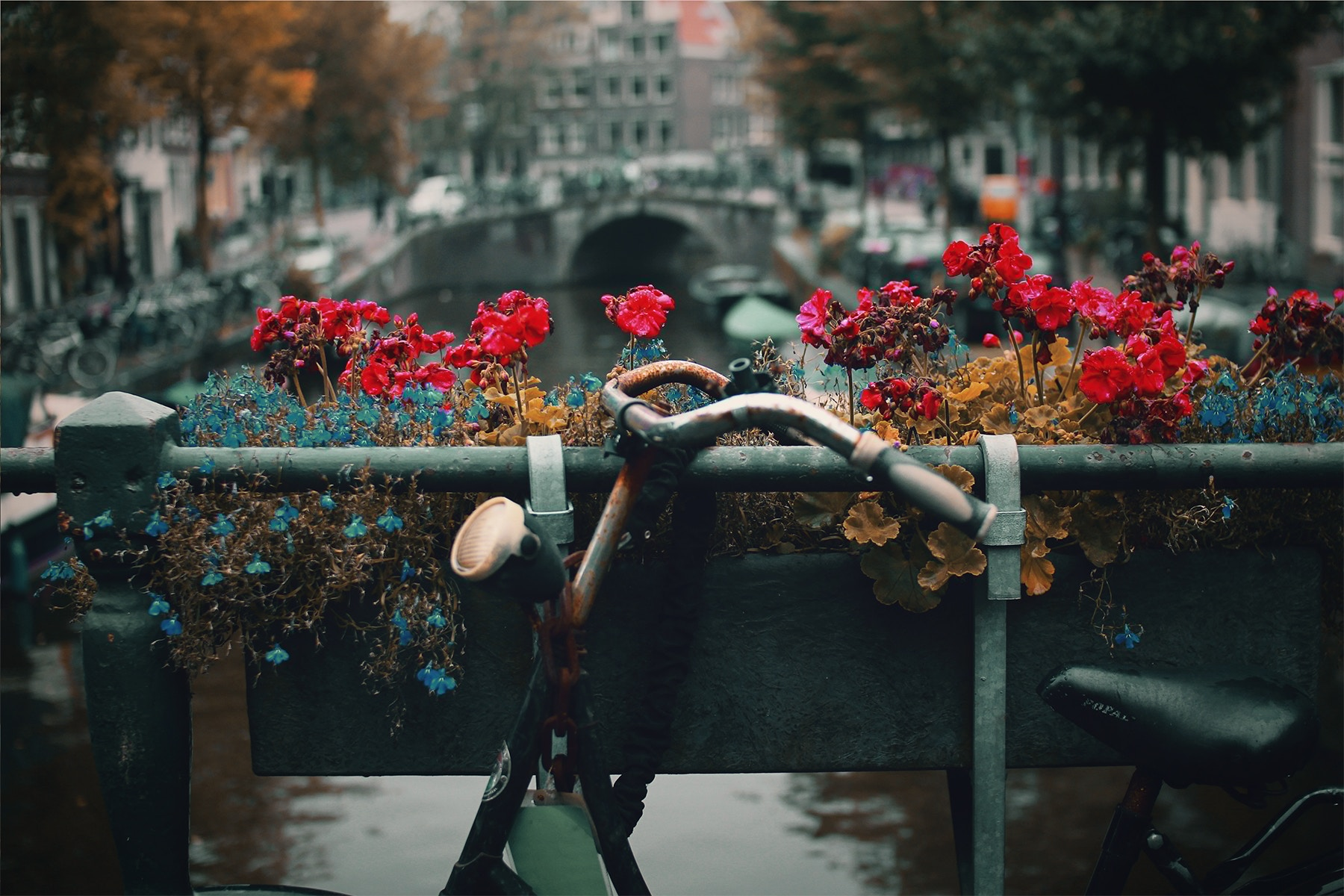 Us visiting Amsterdam on a budget