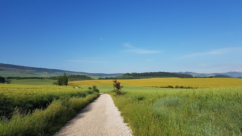 view of fields on the Camino