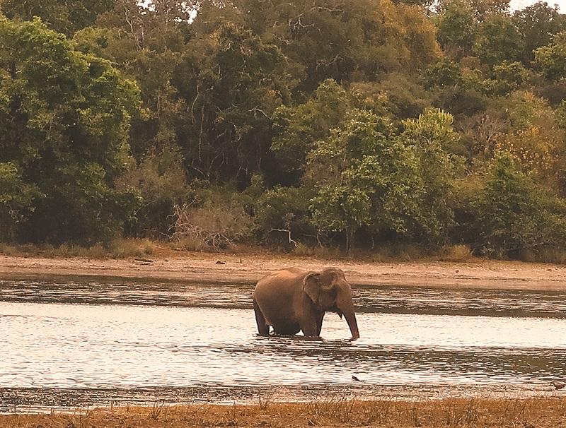 Elephants in Wilpattu Park