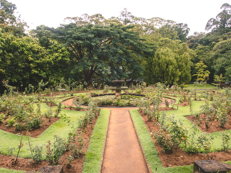royal botanical gardens in Kandy