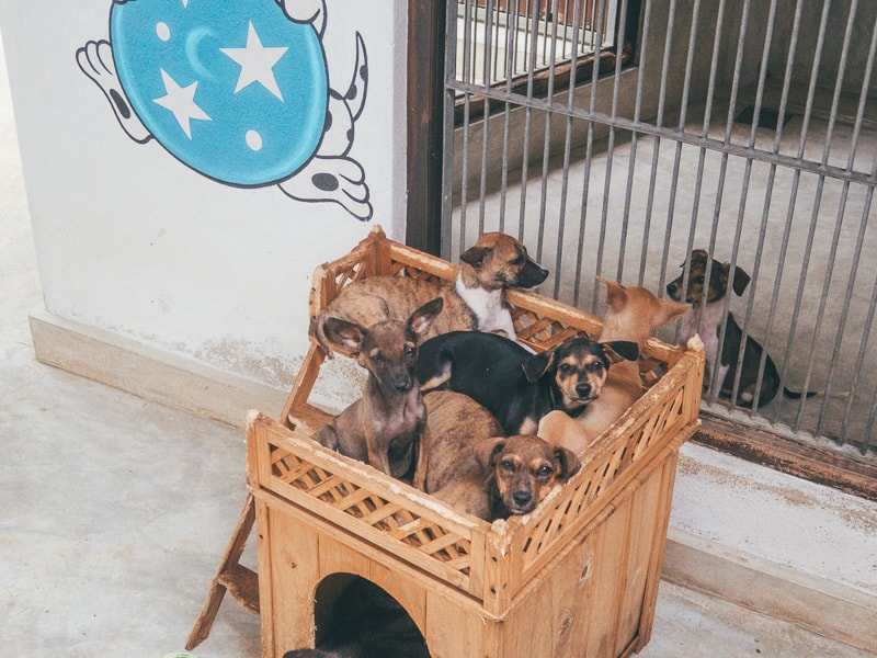 puppies at dog care clinic