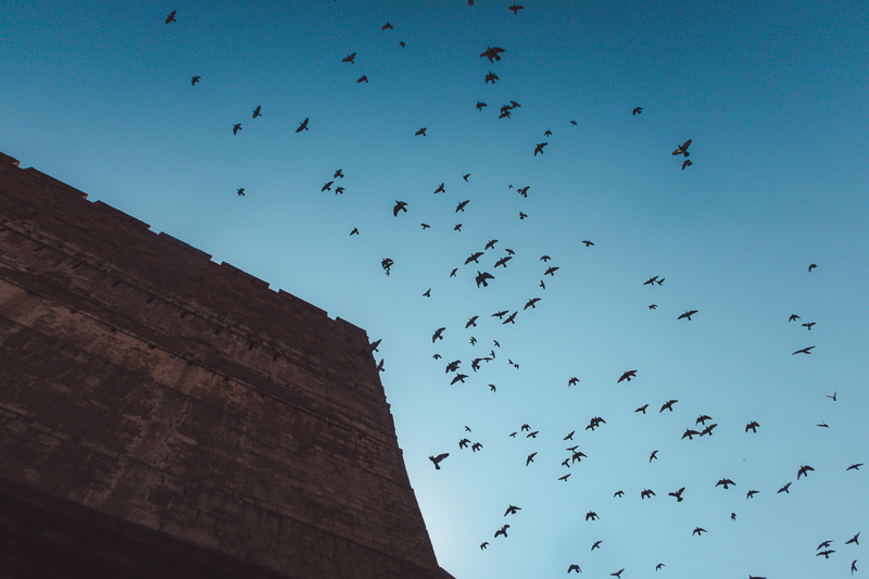 birds at Mehrangarh fort