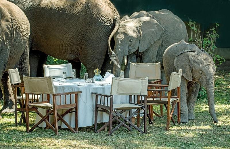 sri lanka safari elephants