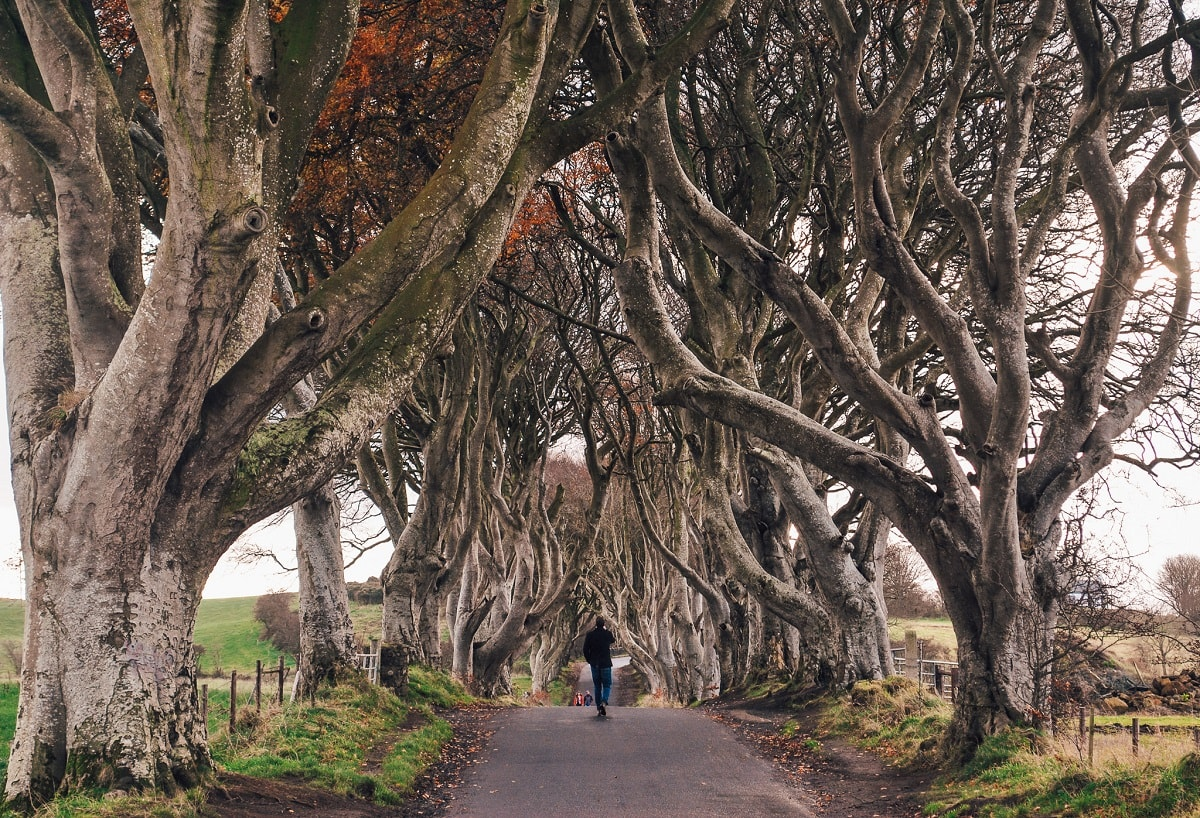 Dark hedges outside Belfast